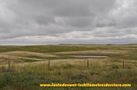 Grass land (1) (1280x850)