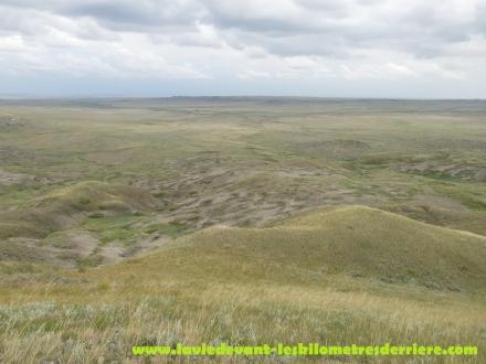 Grass land (10) (1280x960)