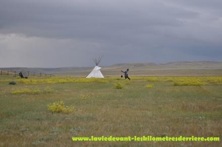 Grass land (16) (1280x850)