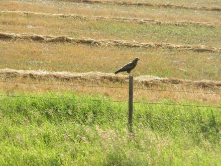 Traversée Regina Grasslands (42) (1024x768)