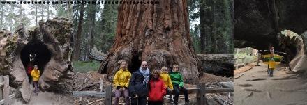 grant tree