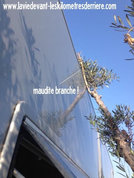 2 branche (960x1280)