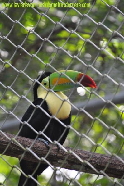 5 zoo (5)