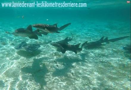 7 snorkeling (11)