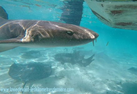 7 snorkeling (12)