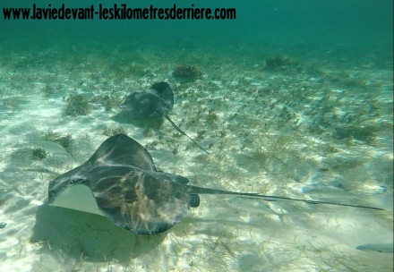 7 snorkeling (13)