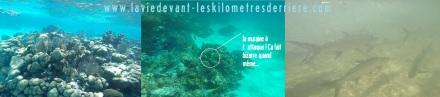 7 snorkeling 2