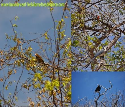 1 oiseau (1)