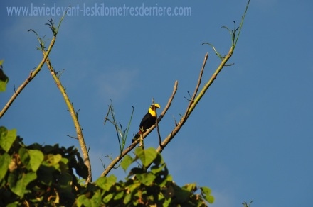 6 toucan