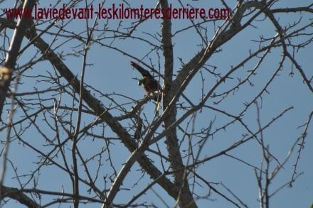 7 toucan 2