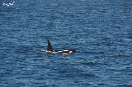2 orques (4)