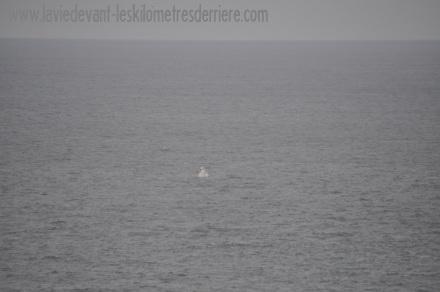5 baleine (2)