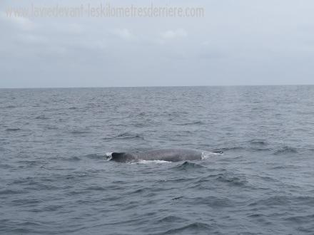 6 baleines 2 (1)