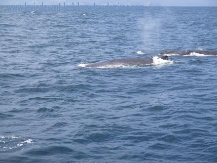 6 baleines 2 (2)