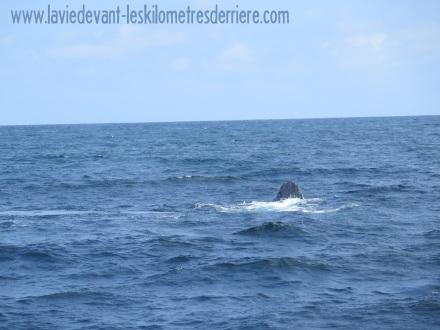 6 baleines 2 (5)