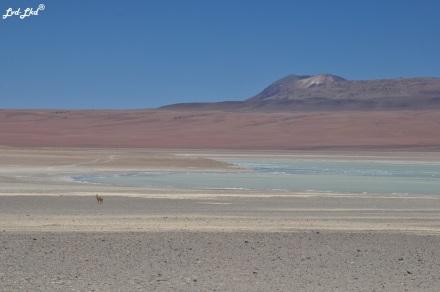6 laguna blanca (2)