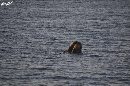 10 baleines 5 (1)