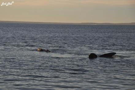 10 baleines 5 (2)