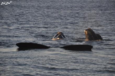 10 baleines 5 (3)