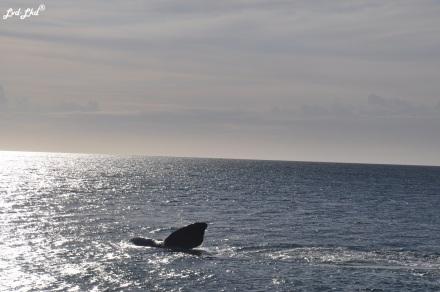 2 baleines 1 (1)