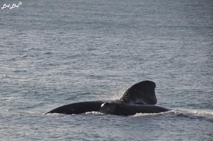 2 baleines 1 (3)