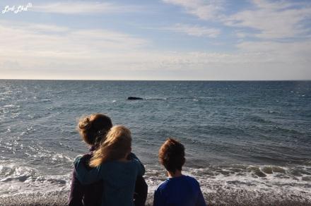 2 baleines 1 (6)
