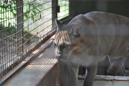 2 zoo (1)