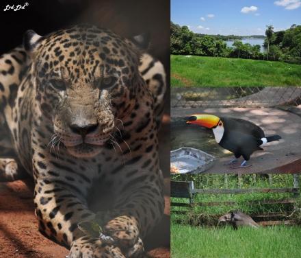 2 zoo (4)