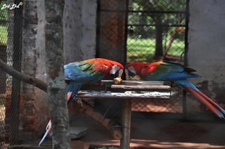 2 zoo (5)
