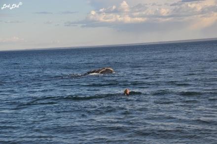 3 nage baleines (1)