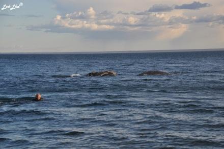 3 nage baleines (2)