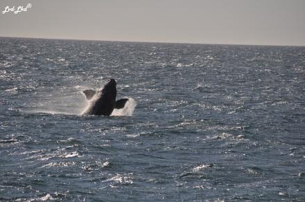 4 baleine 2 (1)