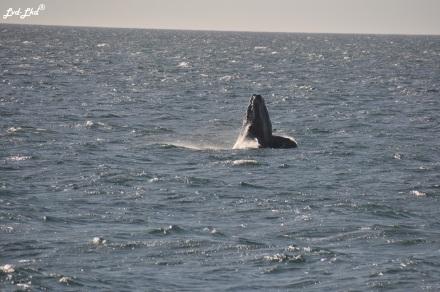 4 baleine 2 (2)