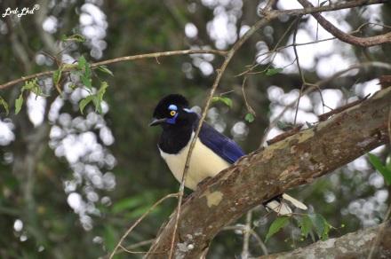 4 Chutes d'Iguazu singe (1)