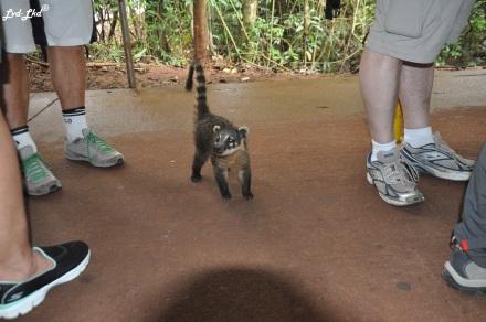 4 Chutes d'Iguazu singe (2)