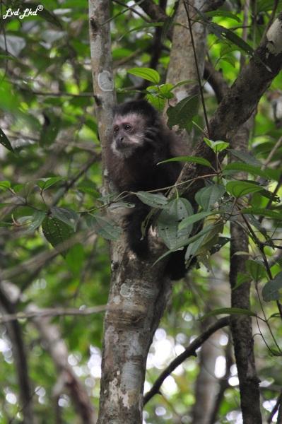 4 Chutes d'Iguazu singe (3)