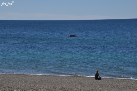 6 baleines 3 et jeu (1)