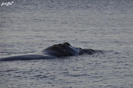7 baleines 4 (1)