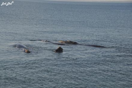 7 baleines 4 (2)