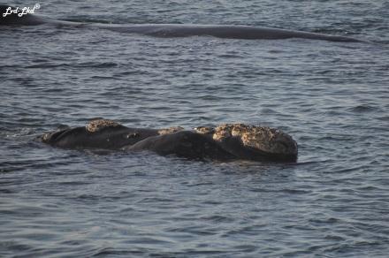 7 baleines 4 (3)