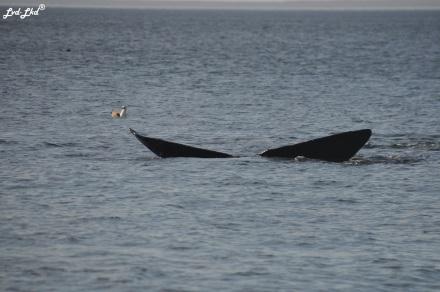 7 baleines 4 (4)