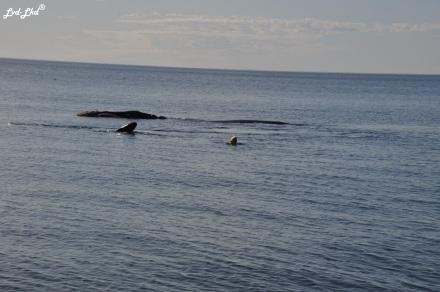 8 baleine nage 2 (3)
