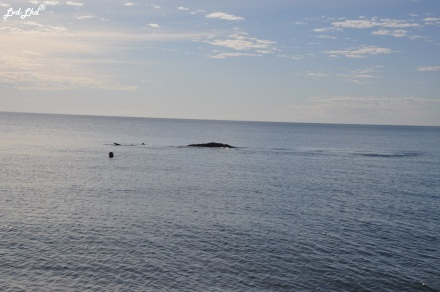 8 baleine nage 2 (4)