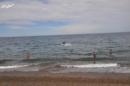 9 baleines (3)