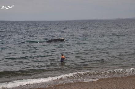 9 baleines (4)