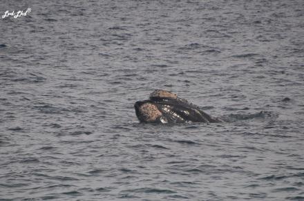 9 baleines (5)