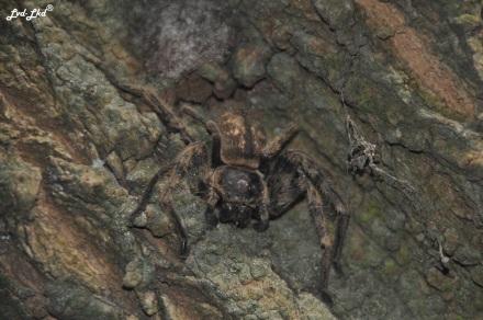 2 araignée