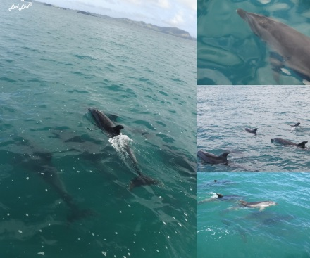 7 Dauphins (1)