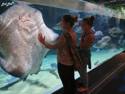 10 Aquarium (1)