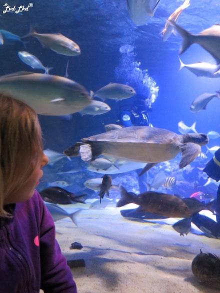 10 Aquarium (6)